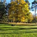 Photos: 公園の樹木