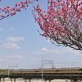 匂いおこせよ梅の花、主なしとて春な忘れそ。(近鉄京都線:京都府)