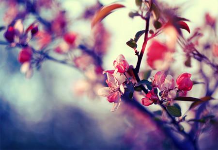 7-pink-spring