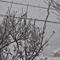 雪が降りだした