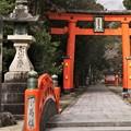 神社ガール