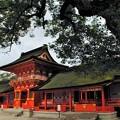 九州への旅(宇佐)