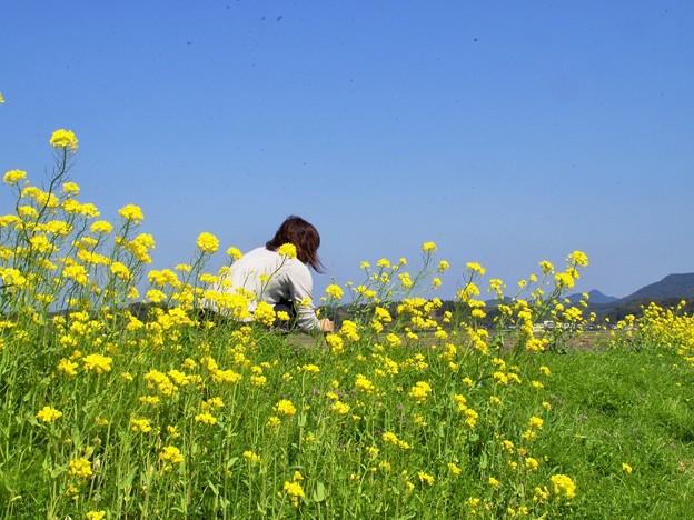 菜の花を摘む