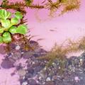 写真: 春ルンルン~♪