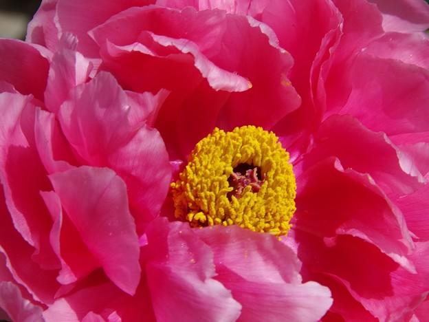 写真: 庭のボタン