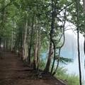青い池と白樺の道