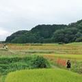 Photos: 葛城古道は大賑わい