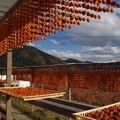 Photos: 串柿のれん