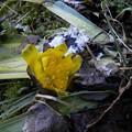 Photos: 待ち遠しい春