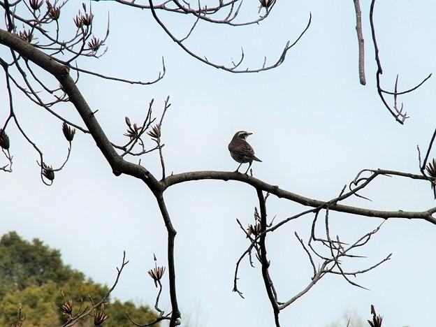 緑化センターで見かけた鳥(2)