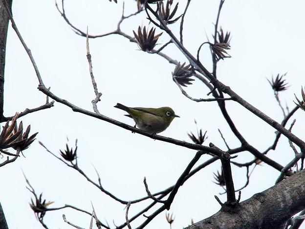 緑化センターで見かけた鳥(1)