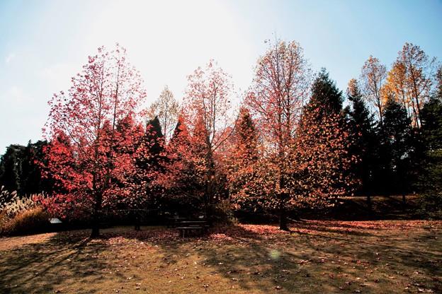 煌めく木々