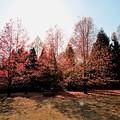 Photos: 煌めく木々