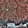駿府城巽櫓