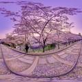 写真: 京都 蹴上 インクライン 桜 360度パノラマ写真