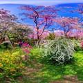 写真: 京都・原谷苑の桜 360度パノラマ写真(8)