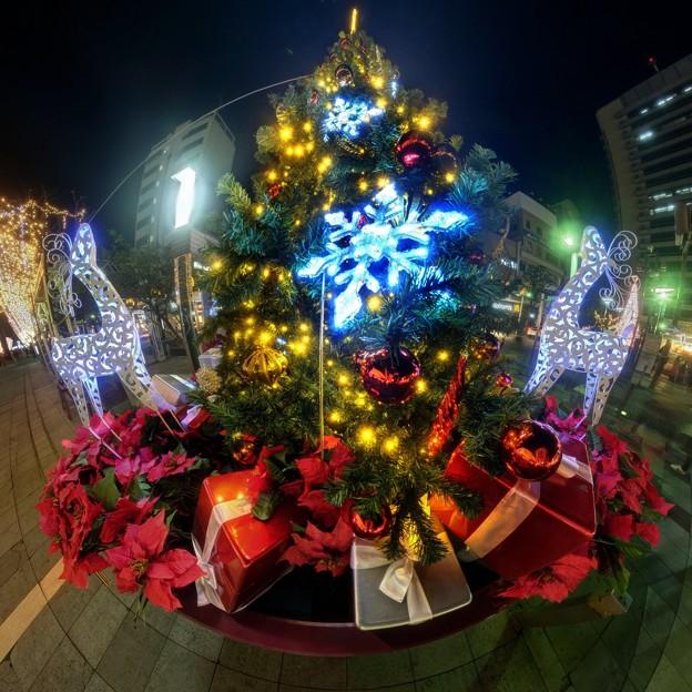 青葉シンボルロードのクリスマスツリー