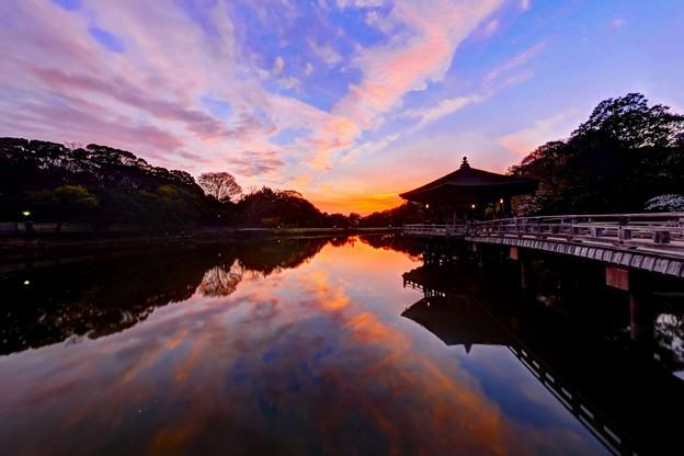 奈良公園 鷺池 浮見堂 夕景