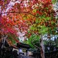 京都 大原 寂光院 山門付近 紅葉