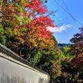 Photos: 東大寺境内(6)