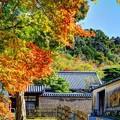 Photos: 東大寺境内(7)
