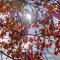奈良公園 飛火野園地 紅葉(1)