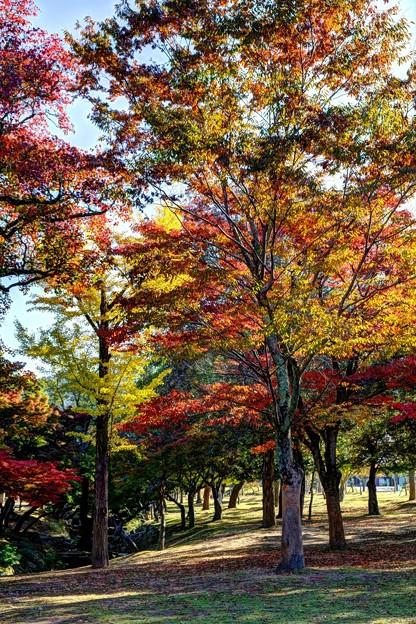 奈良公園 春日野園地 紅葉(1)