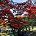 奈良公園 春日野園地 紅葉(2)