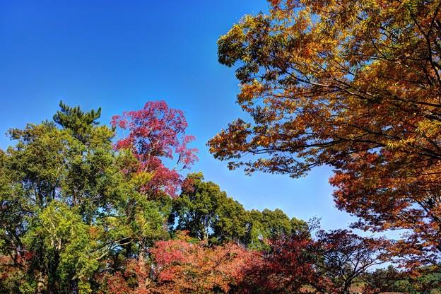 奈良公園 春日野園地 紅葉(3)