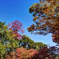 Photos: 奈良公園 春日野園地 紅葉(3)