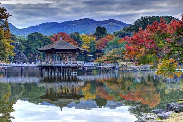 奈良公園 鷺池 浮見堂