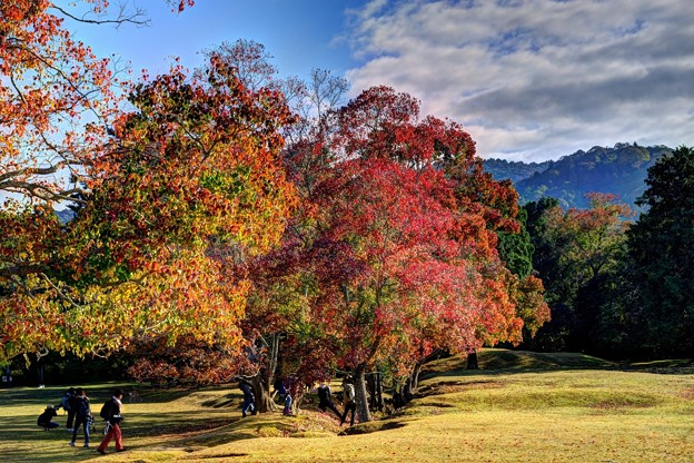 奈良公園 飛火野園地 紅葉(3)