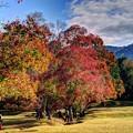 Photos: 奈良公園 飛火野園地 紅葉(3)
