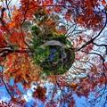 駿府城公園 紅葉山庭園 紅葉 Little Planet