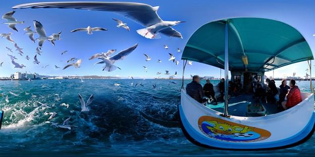 清水港 ユリカモメ 水上バスより 360度パノラマ写真