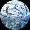 清水港 ユリカモメ 水上バスより 魚眼風180度
