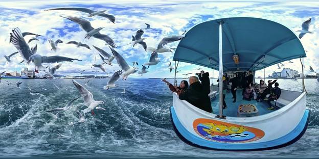 清水港 ユリカモメ 水上バスより 360度パノラマ写真 HDR