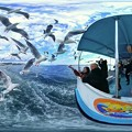 Photos: 清水港 ユリカモメ 水上バスより 360度パノラマ写真 HDR