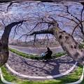 長尾川河畔 左岸 桜 360度パノラマ写真(2)