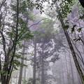 Photos: フォレスト 田貫湖畔(1)