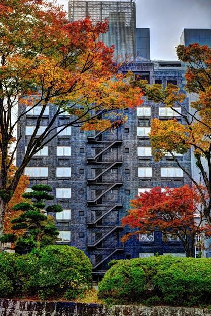 Photos: 街中の紅葉