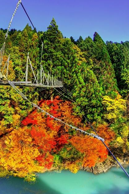 井川 夢の吊橋 紅葉
