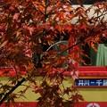 大井川鉄道井川線トロッコ列車と紅葉