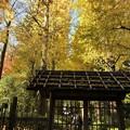 Photos: 杉並大田黒公園