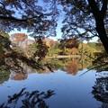 Photos: 杉並善福寺公園