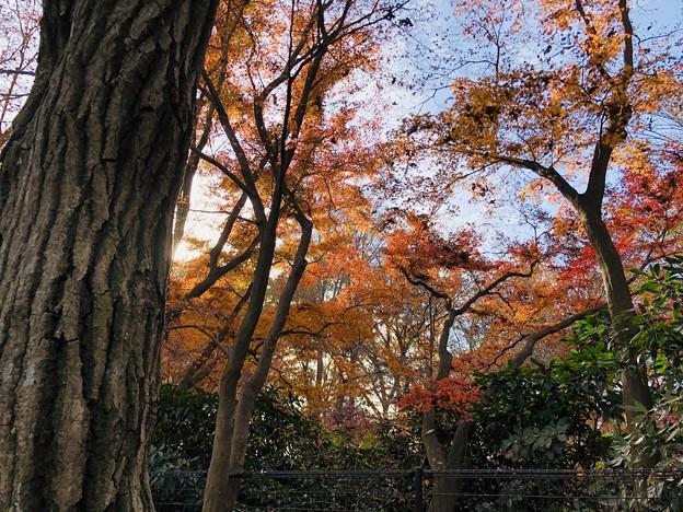 秋と冬の挟間
