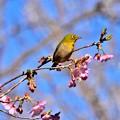 Photos: 春の散歩道