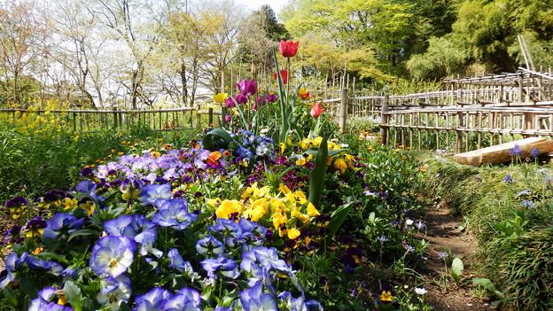 彩り豊かな花壇