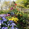 Photos: 彩り豊かな花壇