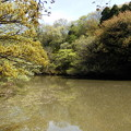 Photos: 奥へ行くと上池という池